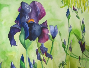 Watercolor of Paris Irises